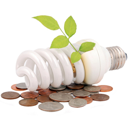 Lightbulb-Plant-and-Coins262