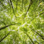 Stepping up to net zero before it's too late